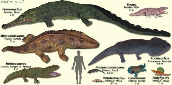 Temnospondyls.jpg