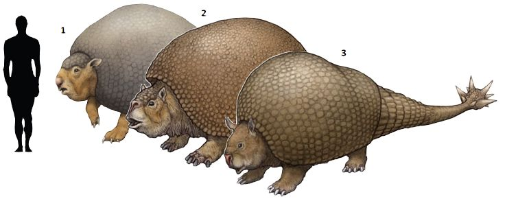 The several type of armadillo species in the world