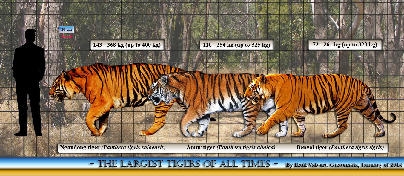 "an analysis of the bengal tiger ""bengal tiger at the baghdad zoo"" is a fierce political statement against war."