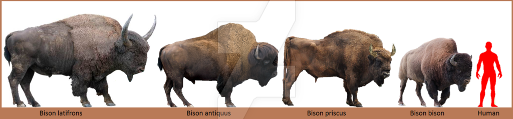 http://valentint.blog.bg/photos/178454/original/bison_preview_by_homero13-d7oxv1f.png