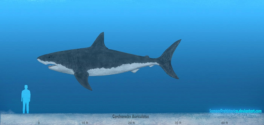 Блогът на valentint :: Encyclopedia Largest prehistoric animals Vol. 1 Vertebrates part11 Sharks ...