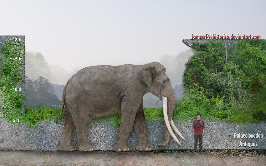 the four tusked elephant The value of raw ivory in beijing had tripled in the four years up to 2014 of buying ivory and the slowdown of the chinese economy are all thought to have contributed to the reduced demand for elephant tusks about save the elephants save the elephants.
